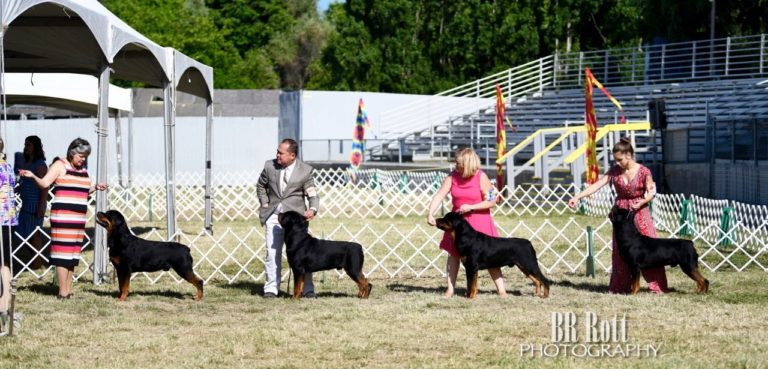 Judging Dogs Woofstock